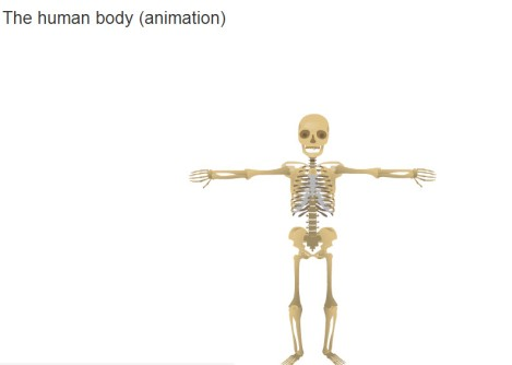 BODY ANIMATION